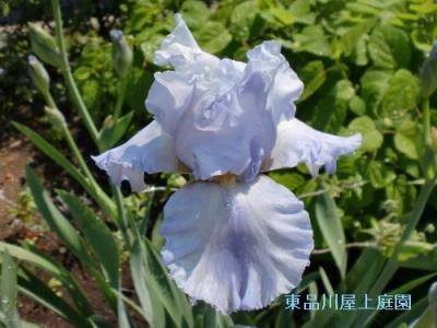 airisu1_20130505141852.jpg