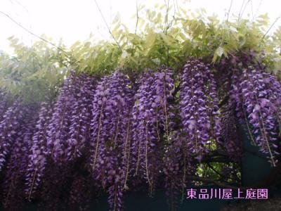 fuji_20130419160532.jpg