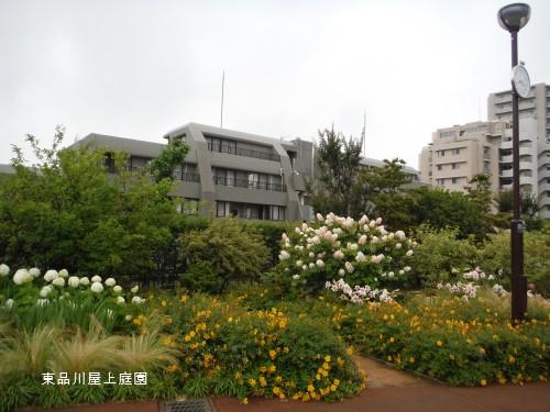kasiwaba1.jpg
