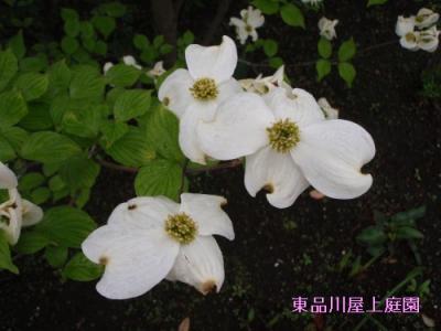 mizuki1_20130424141736.jpg