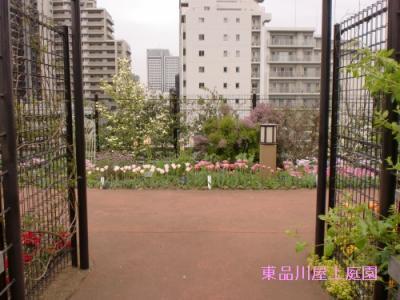 pinnku_20130424140249.jpg
