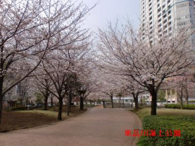 sakura_20130322172711.jpg