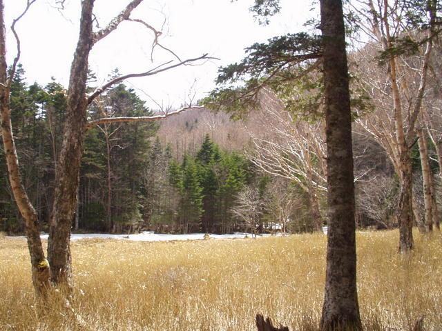 南アルプス-北岳(夜叉神・池山吊尾根)H16・5・1~5・3③ 007
