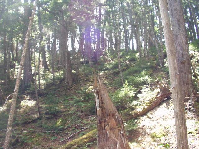 南アルプス-北岳(夜叉神・池山吊尾根)H16・5・1~5・3③ 003