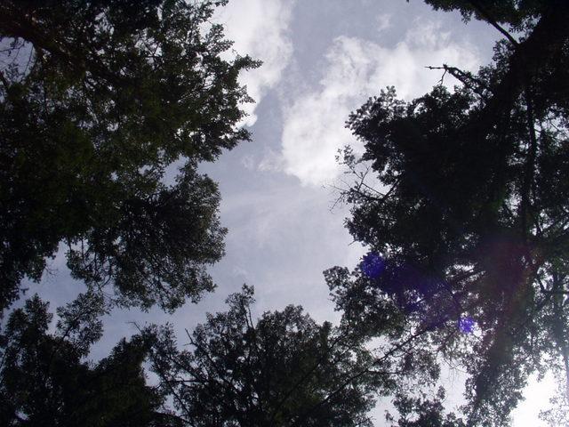 南アルプス-北岳(夜叉神・池山吊尾根)H16・5・1~5・3③ 005