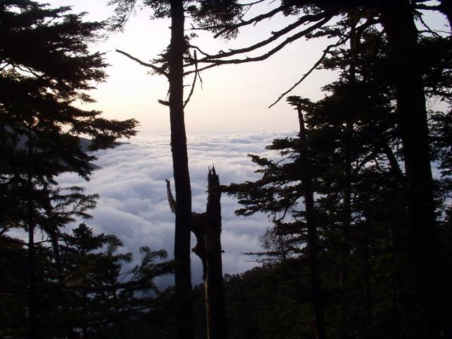 南アルプス-北岳(夜叉神・池山吊尾根)H16・5・1~5・3③ 012