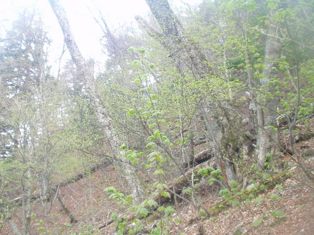 南アルプス-北岳(夜叉神・池山吊尾根)H16・5・1~5・3 029