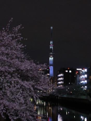 スカイツリーと桜 1