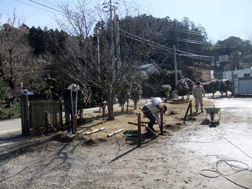 2013.1.31 鎌足桜の手入れ(柵) 027 (3)