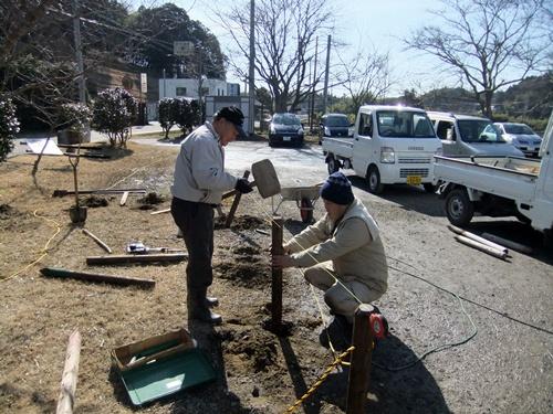 2013.1.31 鎌足桜の手入れ(柵) 027 (6)