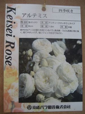 s-IMG_3746