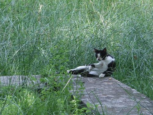 タソス_リメナスの猫さん (1)