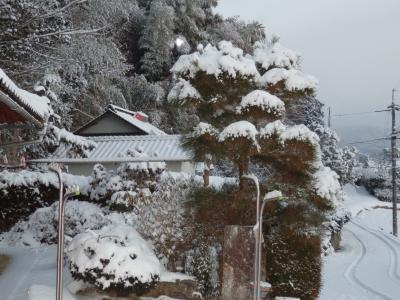 1/28積雪