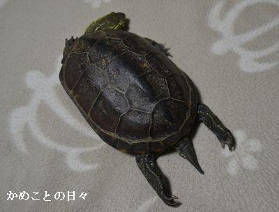 DSC_0129-suke.jpg