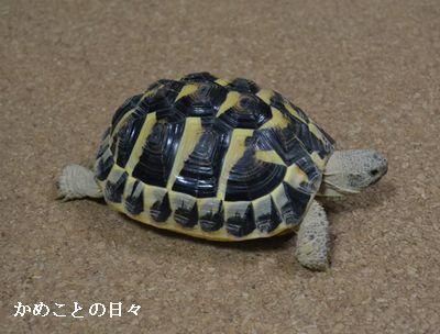 DSC_0132-fu.jpg