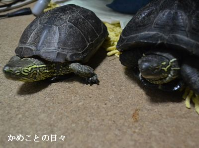 DSC_0359-sukeco.jpg