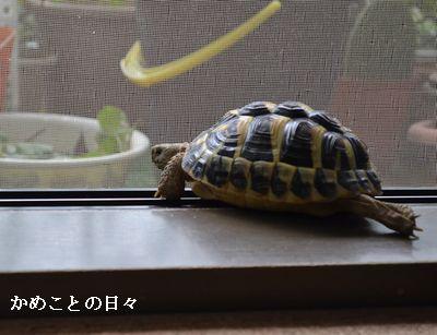 DSC_0443-fu.jpg