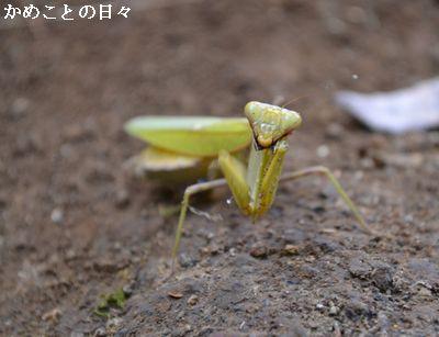 DSC_0620-kama.jpg