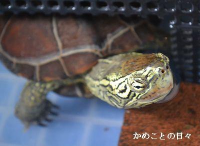 DSC_0735-suke.jpg