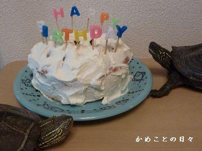 P1300910-cake.jpg