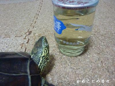 P1330042-sake.jpg