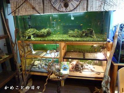 P1330835-zoo2.jpg