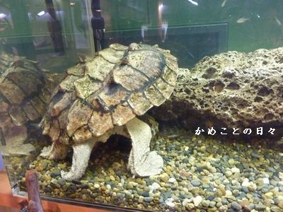 P1330836-zoo3.jpg