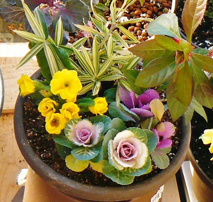 お正月の鉢植え