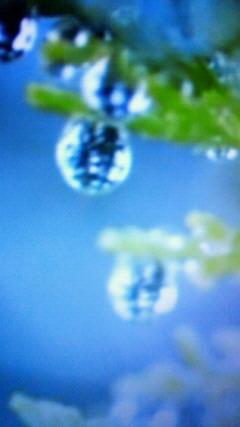 photo152.jpg