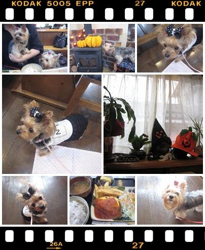 2cats_20111015152651.jpg