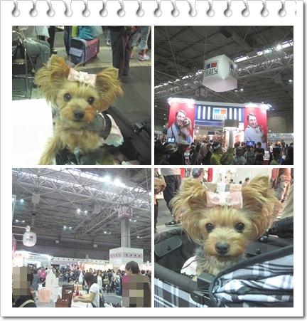 3cats_20110925163933.jpg