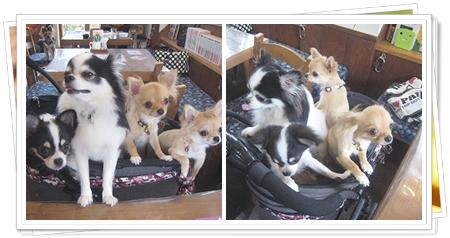 3cats_20111015152650.jpg