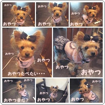 3cats_20111102111720.jpg