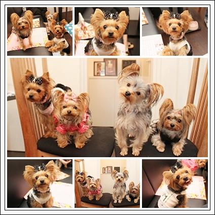 7cats_20111026230203.jpg