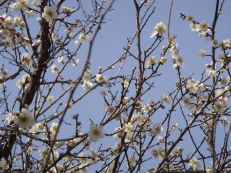 豆まき・梅の花 007