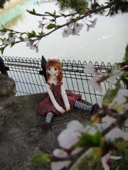 桜201204-04