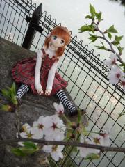 桜201204-05