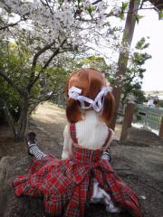 桜201204-06