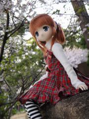 桜201204-07
