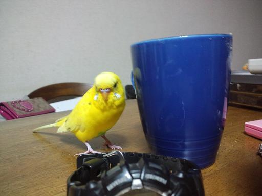 ぼくのカップ!