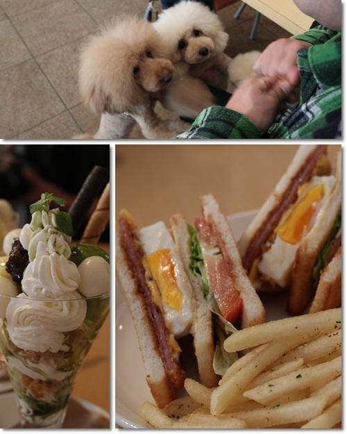 cats6_20111018172520.jpg