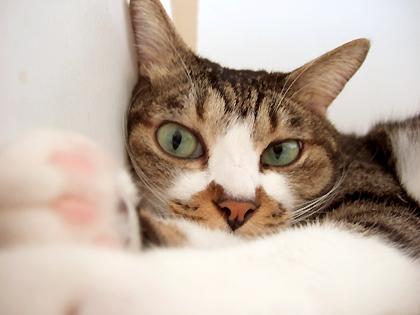 「つっぱしる猫」でつっぱしますょ