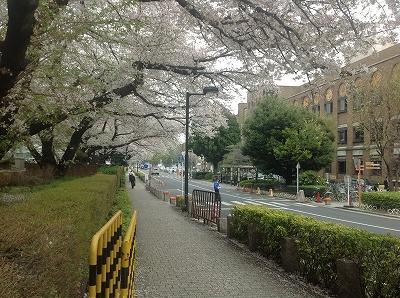 TokyoUniversityHongo
