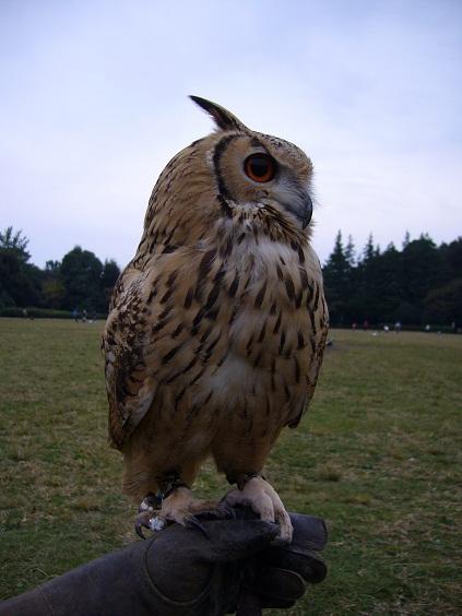 hawk02.jpg