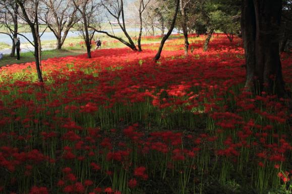 川東公園1