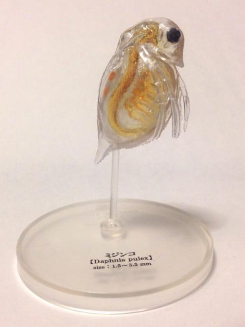 極小の共存者微生物2