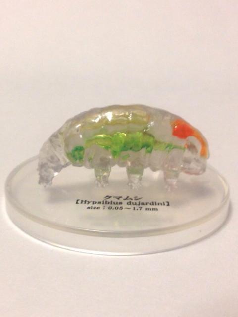極小の共存者微生物3