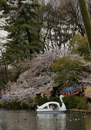 DSC04474都内桜めぐり