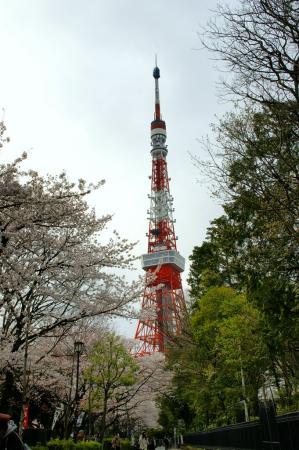 DSC04551桜東京タワー