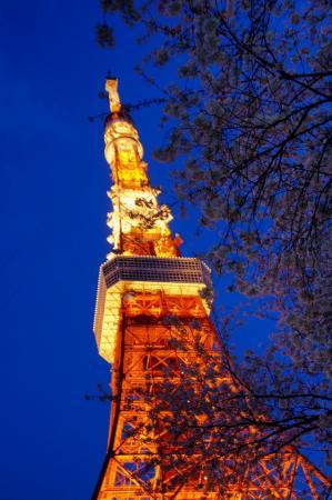 DSC04909桜東京タワー